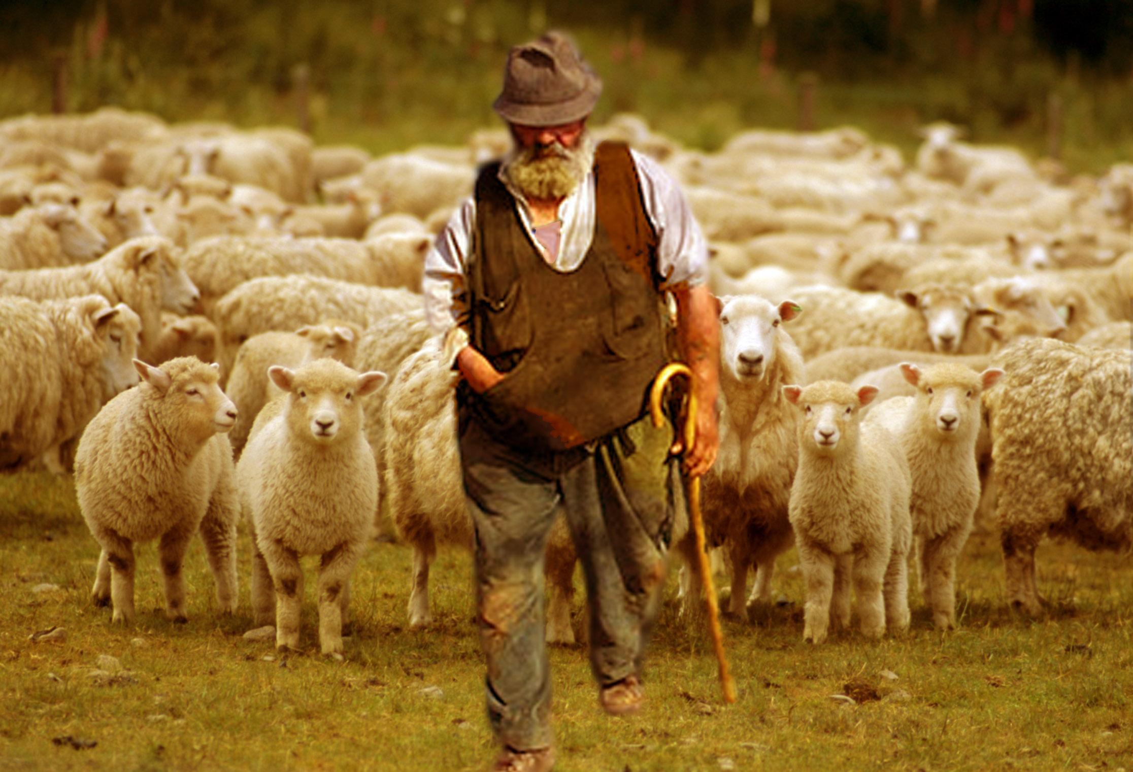 Abbandonate dai pastori….